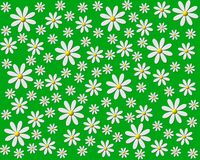Daisies on green. Illustration of daisy flowers on green background Stock Photos