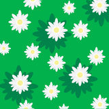 Daisies. Green background decorated with daisies Royalty Free Stock Image