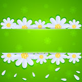 Daisies on green background Royalty Free Stock Photo