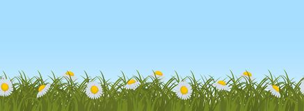 Daisies in green grass on a blue sky background. Seamless border. Daisies in green grass on a blue sky background. Border. Summer flowers. It can be used as a Royalty Free Stock Photo