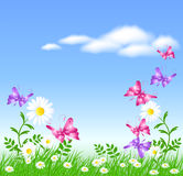 Daisies on the green grass and butterflies Royalty Free Stock Image