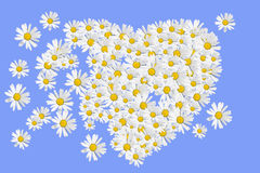 Daisies heart Royalty Free Stock Images