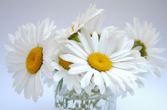 Daisies II Royalty Free Stock Images