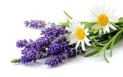 Daisies and Lavender flowers bunch on white background. Daisies and Lavender flowers bunch close up isolated on white background Royalty Free Stock Image