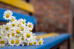 Daisies lie on a bench in the street Stock Photos