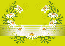 Daisies on light green background.Background.Postc. Greeting card with daisies on light green background.Background.Postcard Stock Photo