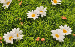 Daisies meadow Stock Photo