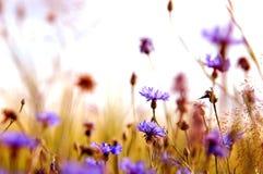 Daisies' meadow stock photos