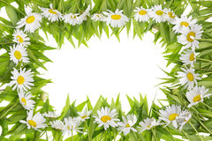 Daisies meadow frame concept Stock Images