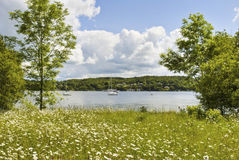 Daisies, meadow, and lake Stock Image