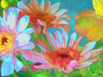 Daisies in Multicolor 1 Royalty Free Stock Photography