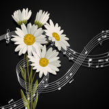 Daisies with music notes. Royalty Free Stock Images