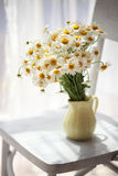 Daisies near window at home in sunshine. Bouquet of wildflowers on a rustic table at country cottage Royalty Free Stock Image