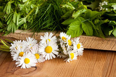 Daisies and other wild edible plants growing in spring. Bedstraw, ground elder Aegopodium podagraria, wild chives, on a wooden background Stock Images