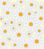Daisies pattern Royalty Free Stock Photography