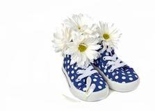 Daisies in polka dot sneakers Stock Image