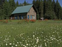 Daisies, Poppies and Building. This wilderness setting was taken in NW Montana near the little hamlet of Polebridge Royalty Free Stock Image