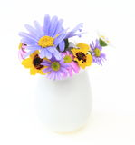Daisies in pot Royalty Free Stock Photo