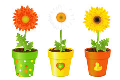 Daisies In Pots With Pictures. Vector Royalty Free Stock Image