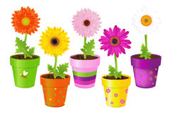 Daisies In Pots With Pictures. Vector Stock Photos