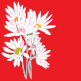 Daisies red card Royalty Free Stock Photography