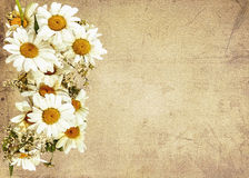 Daisies on sackcloth background Stock Images