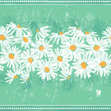 Daisies seamless banner Stock Photos
