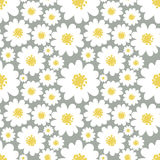 Daisies seamless pattern. White daisies seamless pattern on a grey background.Daisy field Royalty Free Stock Photo