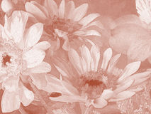 Daisies in Sepia Royalty Free Stock Photo