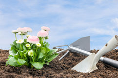 Daisies with shovel and rake Stock Photography