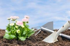 Daisies with shovel and rake Stock Photography