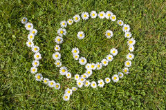 Daisies smoking smiling face. In a green field Royalty Free Stock Photo