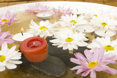 Daisies and spa candles Stock Photos