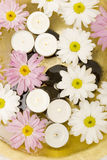 Daisies and spa candles Royalty Free Stock Images