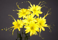 Daisies with splashes Stock Image
