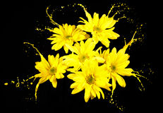 Daisies with splashes Stock Photo