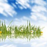 Daisies spring meadow Royalty Free Stock Photos