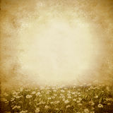 Daisies spring meadow vintage background Stock Image