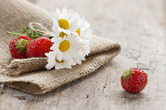 Daisies and strawberries Stock Photos