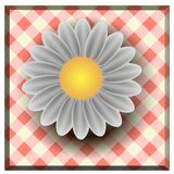 Daisies summer white flower isolated on white background Royalty Free Stock Photos