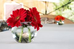 Daisies on the table Royalty Free Stock Image