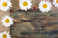 Daisies on the tape of burlap. Royalty Free Stock Images
