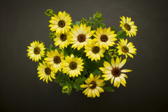 Daisies top view Royalty Free Stock Images