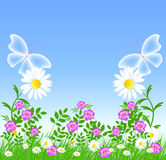 Daisies and transparent butterflies Stock Photo