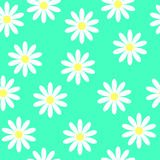 Daisies on a turquoise background, seamless. Seamless flower pattern. White daisies on a blue background. Small cute simple spring flowers. Turquoise background Stock Images