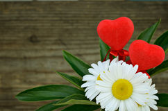 Daisies and two hearts Stock Images