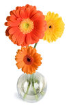 Daisies in vase Stock Image