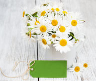 Daisies in vase Royalty Free Stock Photography