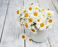 Daisies in vase Stock Image