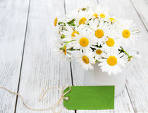 Daisies in vase Stock Photography